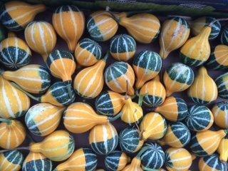 gourd bicolor pear