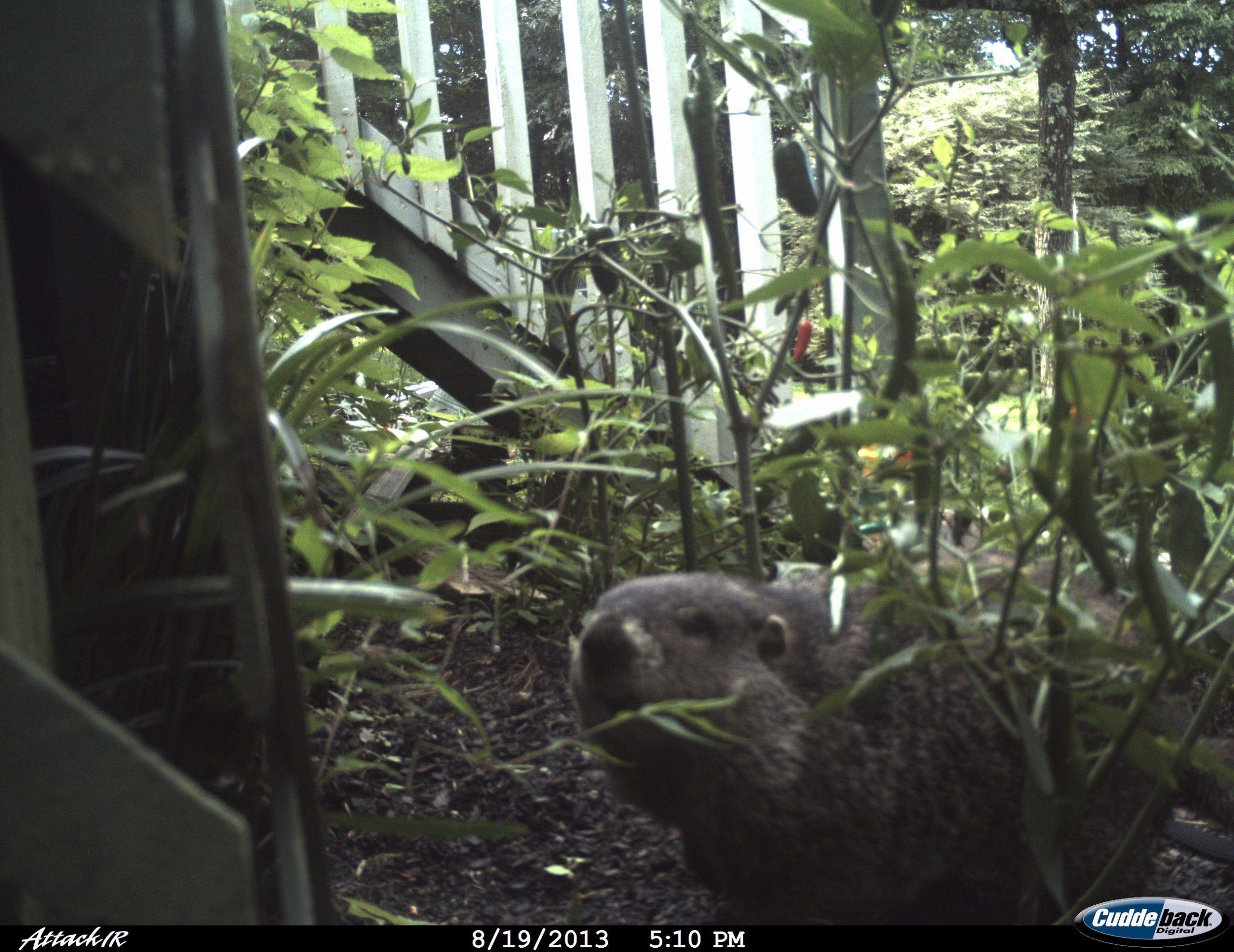 groundhog 4 Scarlett Freelin