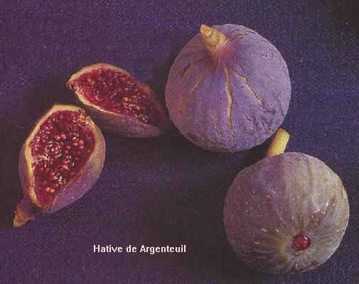 Photo of a Hâtive d'Argenteuil fig