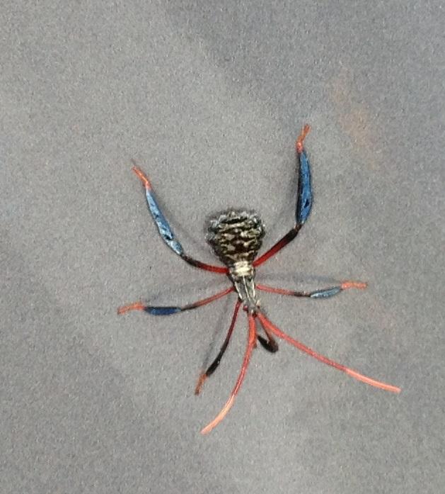 leaf footed bug nymph