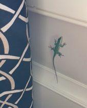 lizard anole 2