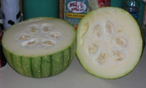 melon cross pollination