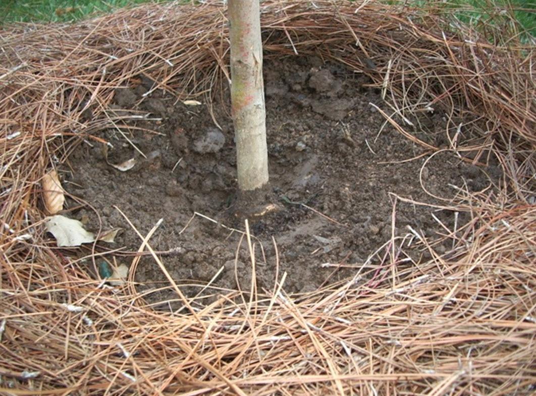 mulch ring