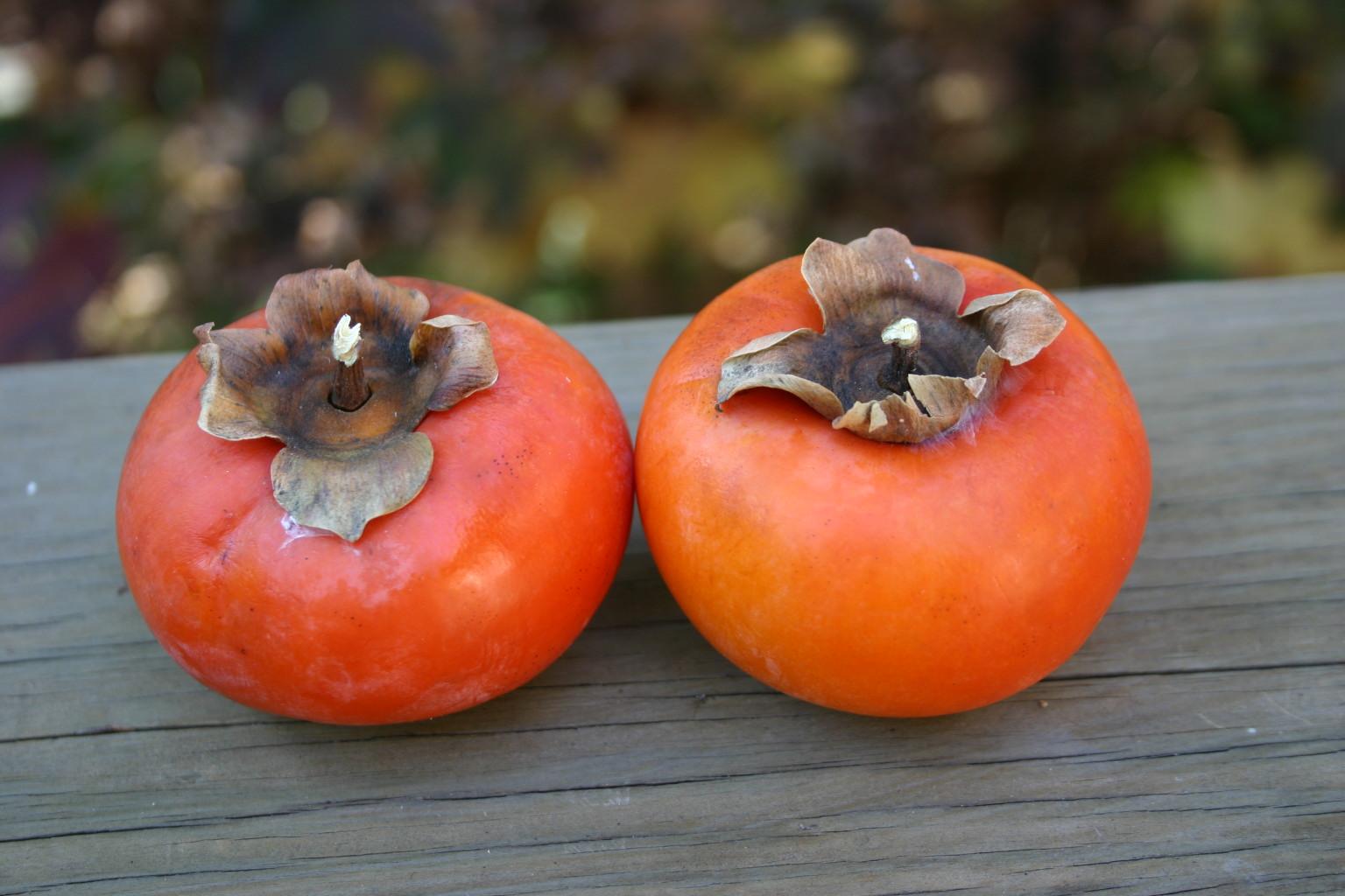 persimmon (2)