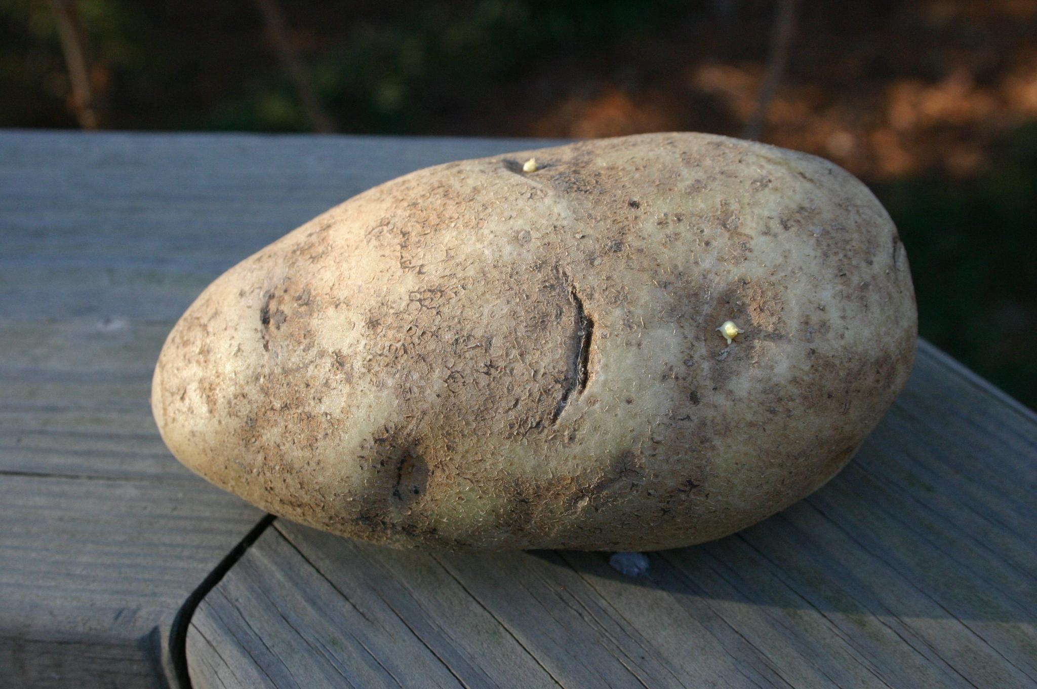 potato Irish
