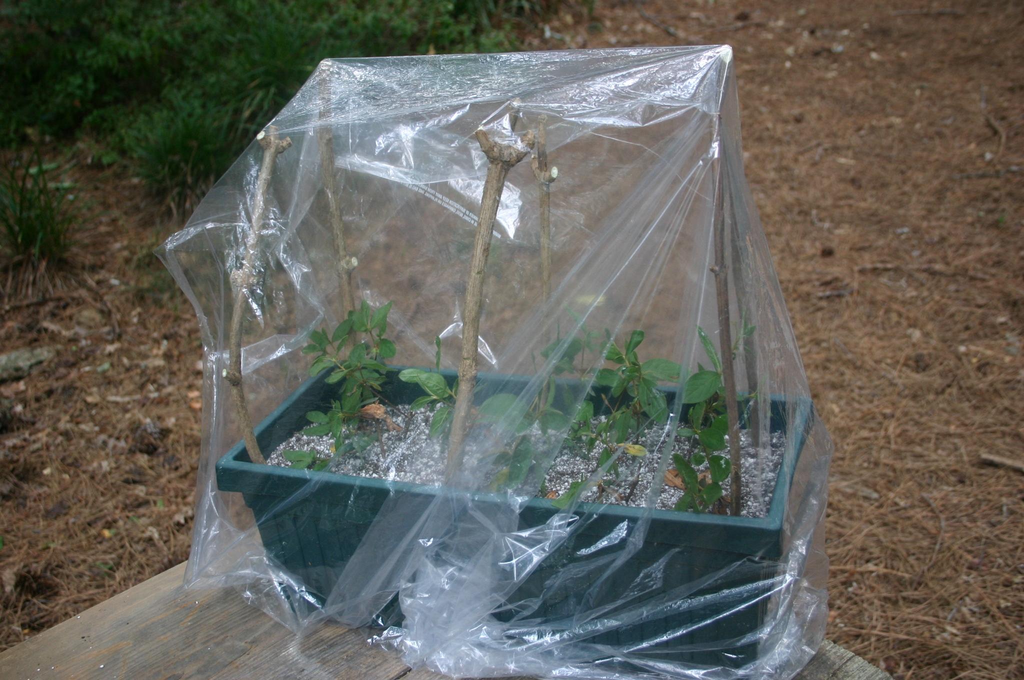 propagation container box