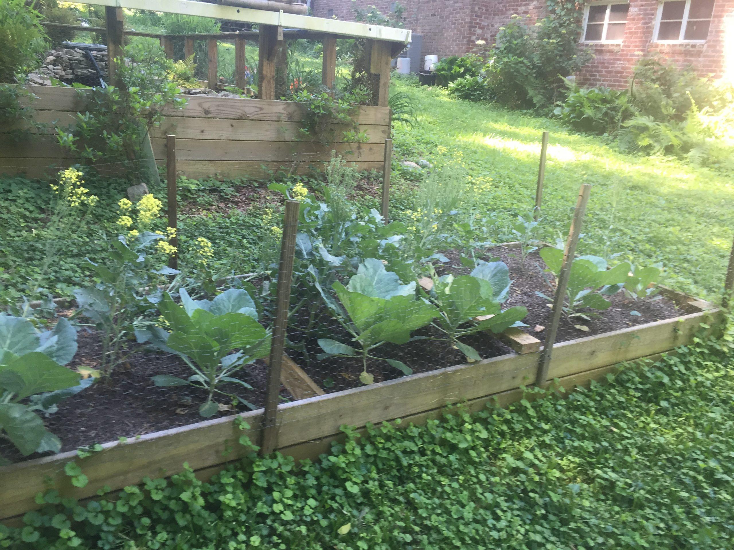 raised bed soil 7