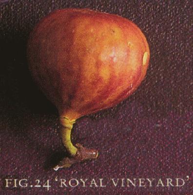 Photo of a Royal Vineyard fig