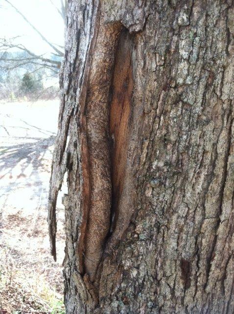 tree underbark