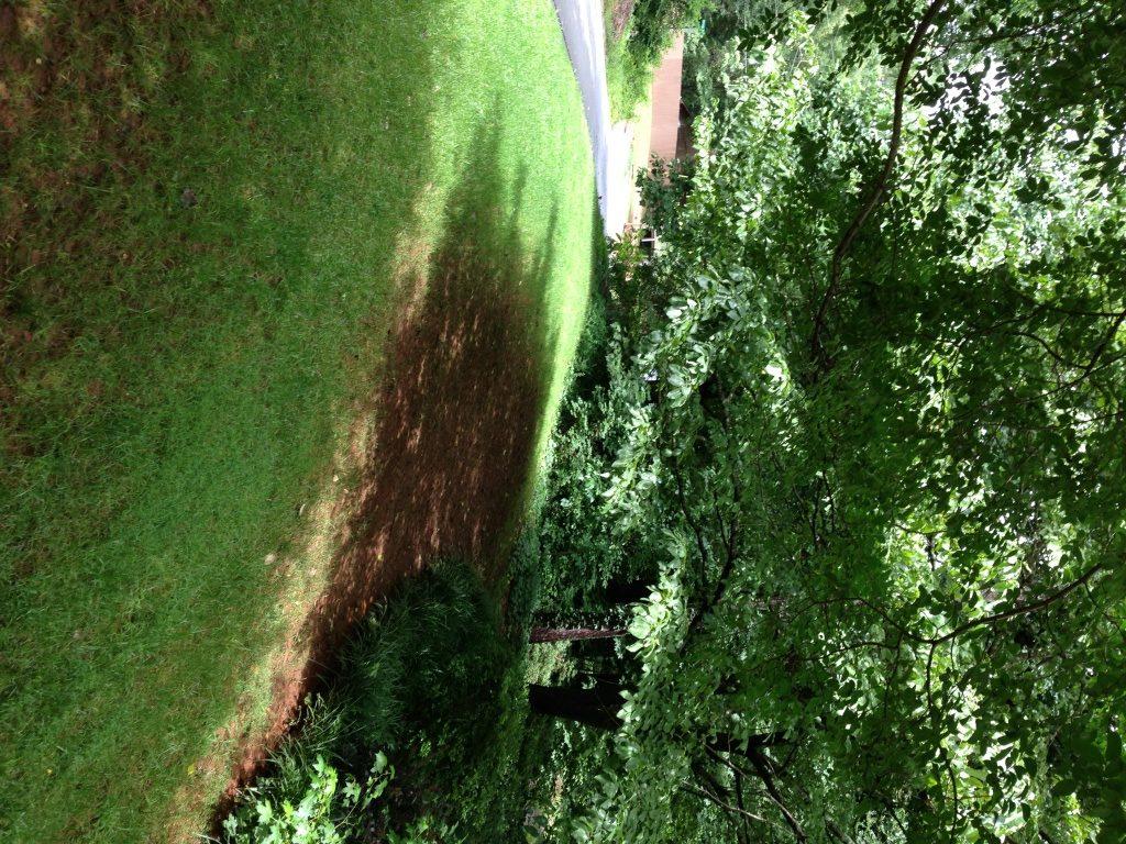 tree grass under