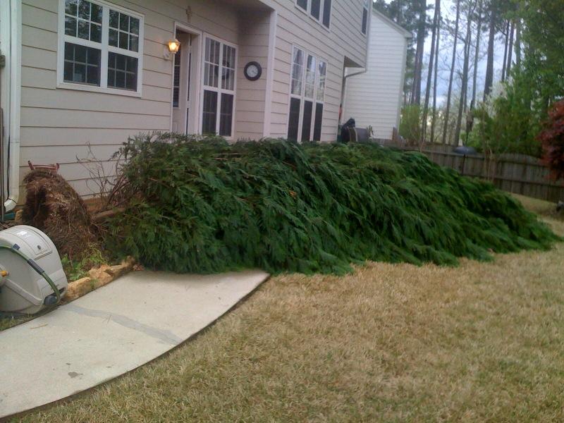 tree leyland down