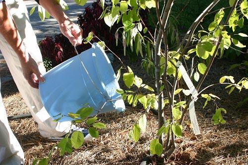 Dihydrogen monoxide being used in a garden