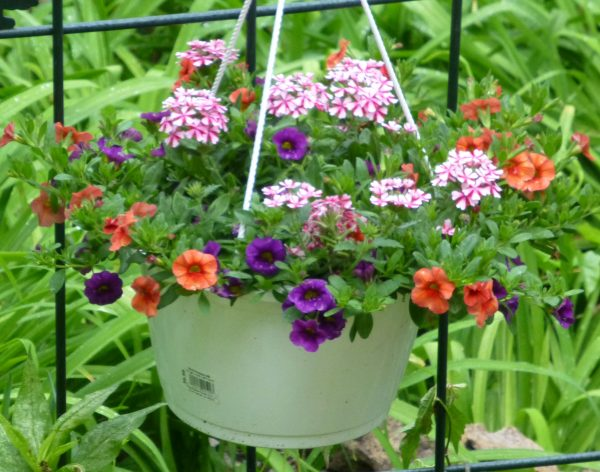 Hanging Baskets on Trees