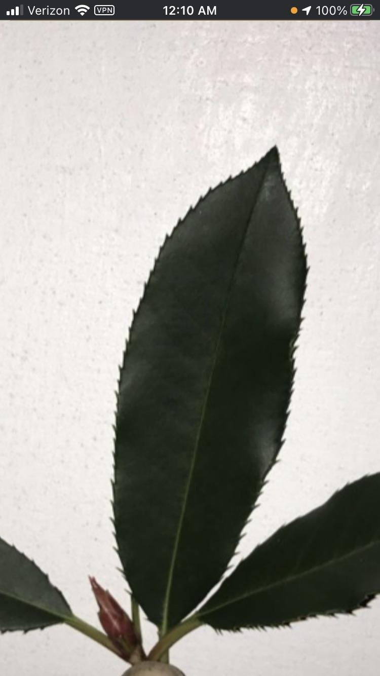 chester-winter-1612016473