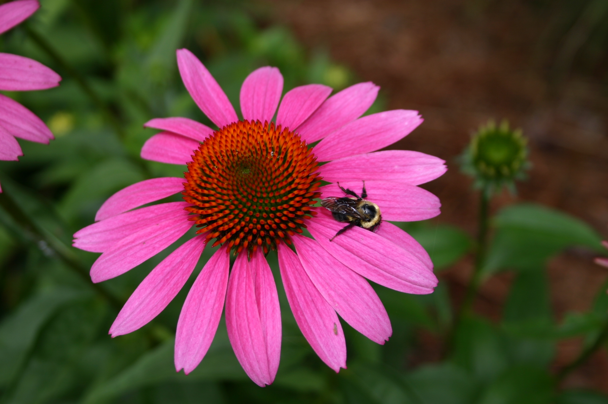 solarizing soil wildflowers