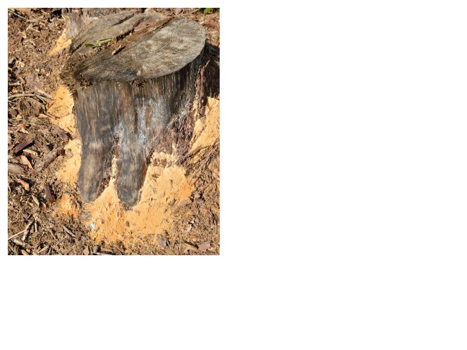 locust-grove-summer-1627954850